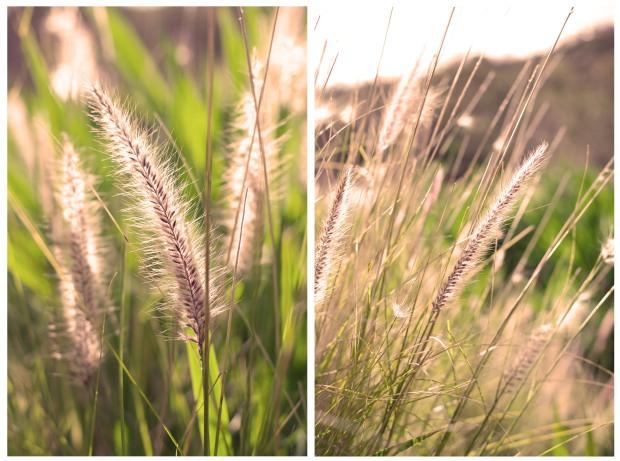 grass diptych
